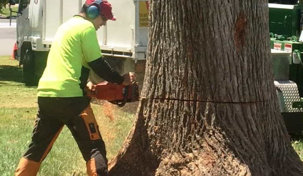 Tree Removal Adelaide Professional